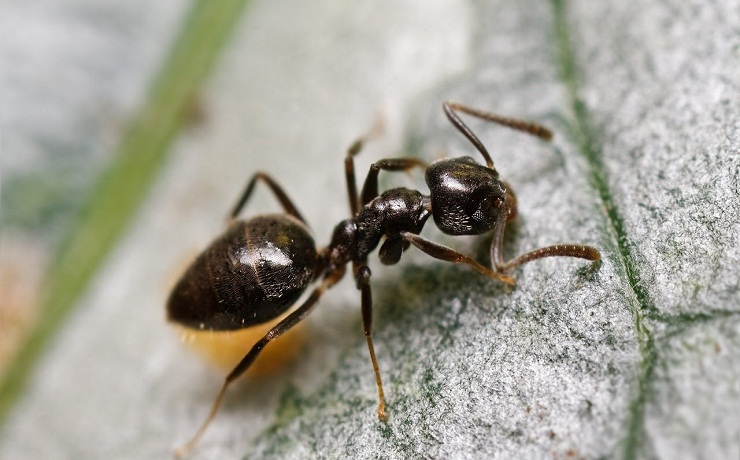 bed bugs control sydney
